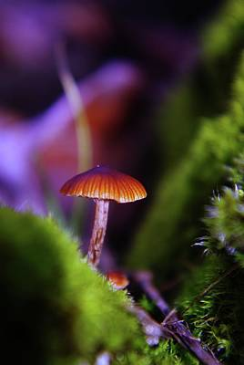 A Red Mushroom  Print by Jeff Swan