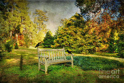 Park Benches Photograph - A Resting Place by Darren Fisher