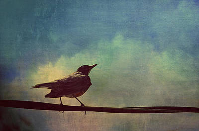 A Robin Sings A Serenade Hanging On A Wire  Print by Maria Angelica Maira