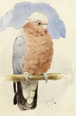 Parrot Painting - A Rose Breasted Cockatoo by Henry Stacey Marks