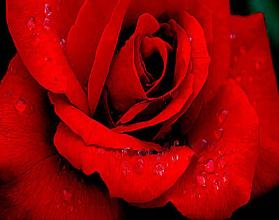 A Rose For A Sweetheart Print by Bob and Nadine Johnston