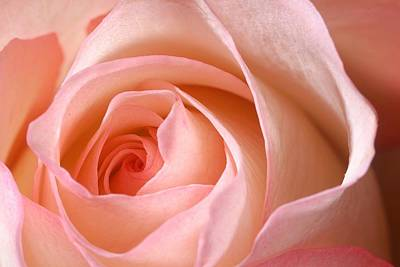 Plants Photograph - A Rose Is A Rose by Joe Kozlowski