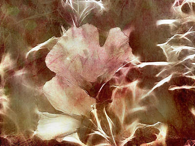 Rose Photograph - A Rose Of Sharon by EricaMaxine  Price