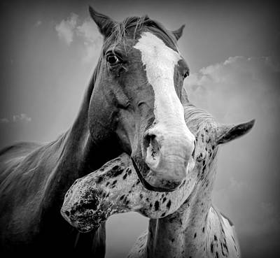 Equine Photograph - A Shoulder To Cry On by Carey Dils