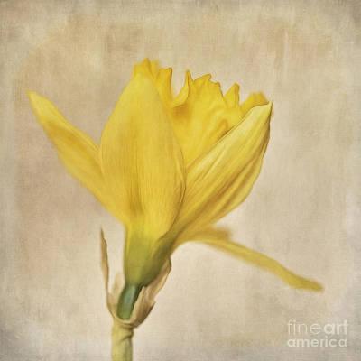 A Simple Daffodil Print by Priska Wettstein