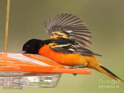 Oriole Digital Art - A Sip From The Other Side by J McCombie