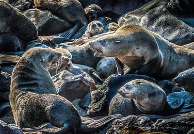 A Slippery Conversation - Fur Seal Photograph Print by Duane Miller