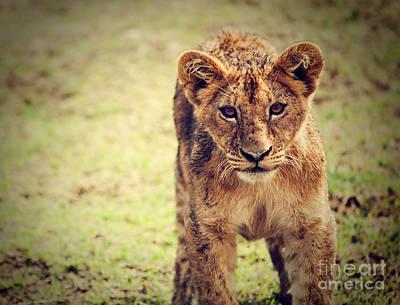 Mammal Photograph - A Small Lion Cub Portrait. Tanzania by Michal Bednarek
