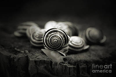 A Snail's World Print by Trish Mistric