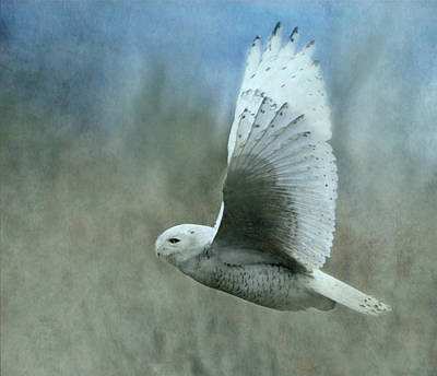 A Snowy Flight Print by Angie Vogel