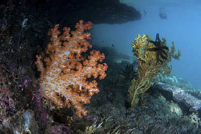 Dampier Photograph - A Soft Coral Colony And Invertebrates by Ethan Daniels