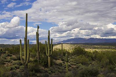 Rainy Day Photograph - A Sonoran Winter Day  by Saija  Lehtonen