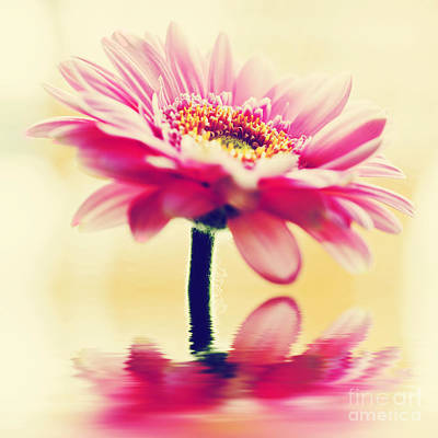 Bloom Photograph - A Spring Flower In Vintage Style by Michal Bednarek