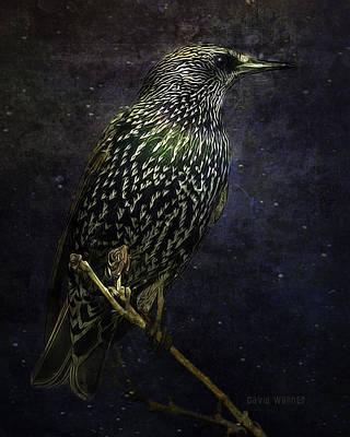 Starlings Digital Art - A Starling In Starlight by David Wagner