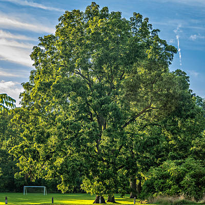 Walnut Tree Photograph - A Summer Evening by Steve Harrington