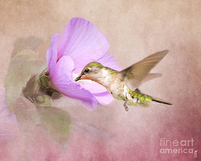 Red Photograph - A Taste Of Nectar by Jai Johnson