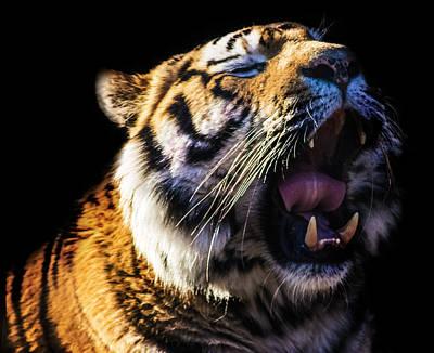 Cat Photograph - A Tiger's Roar by Martin Newman