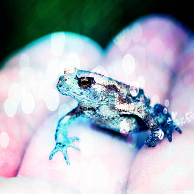 Development Mixed Media - A Tiny Frog by Toppart Sweden