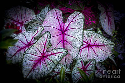 Flowers Miami Photograph - A Touch Of Red by Marvin Spates