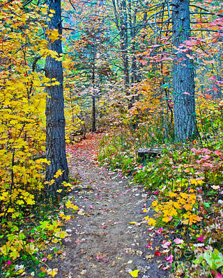 West Fork Digital Art - A Trail In West Fork by Brian Lambert