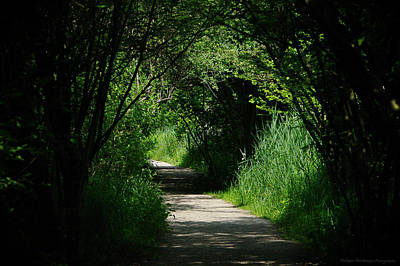 Arbres Verts Photograph - A Tunnel Of Green by Philippe Meisburger