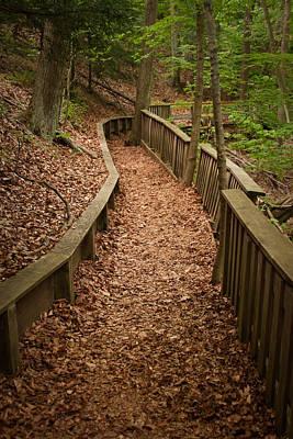 A Walk In The Woods Print by Adam Romanowicz