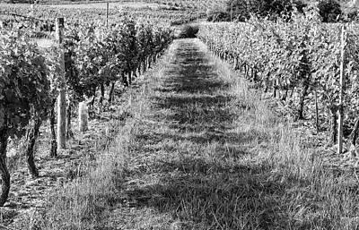 A Walk Through The Vineyard Print by Georgia Fowler