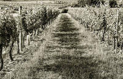 Grapevine Photograph - A Walk Through The Vineyard Toned by Georgia Fowler