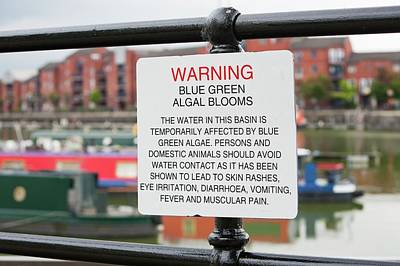 A Warning Sign About Blue Green Algae Print by Ashley Cooper