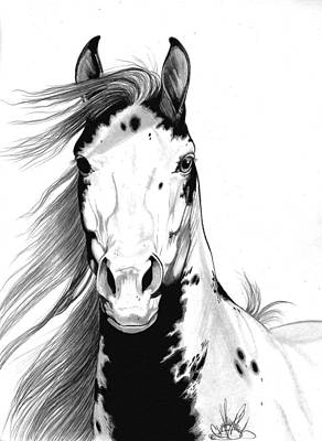 Pinto Drawing - A Wild Mustang I Called Geronimo by Cheryl Poland