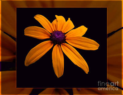 A Yellow Burst Of Sunshine Floral Photography Print by Omaste Witkowski