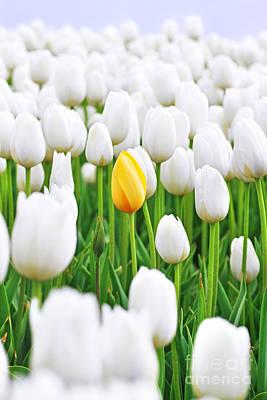 White Tulip Photograph - A Yellow Tulip by Lars Ruecker