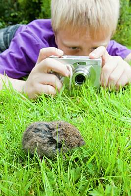 A Young Boy Photographs A Field Vole Print by Ashley Cooper
