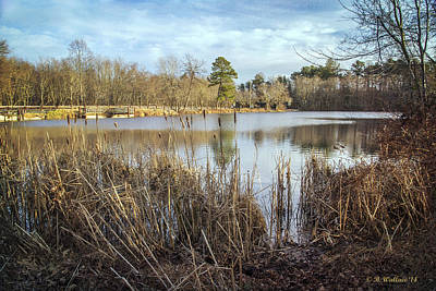 Abbott's Pond Cattails Print by Brian Wallace