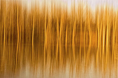 Abstract, Blur Of Trees And Reflections Print by Rona Schwarz