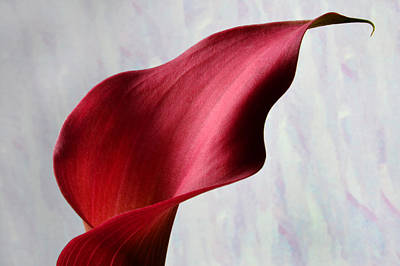 Abstract Calla. Original by Terence Davis