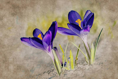 Macro Digital Art - Abstract Crocus Background by Jaroslaw Grudzinski