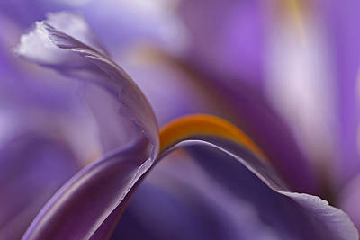 Iris Photograph - Abstract Flowers by Juergen Roth