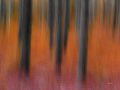 Impressionistic Landscape Photograph - Abstract Forest 4 by Leland D Howard