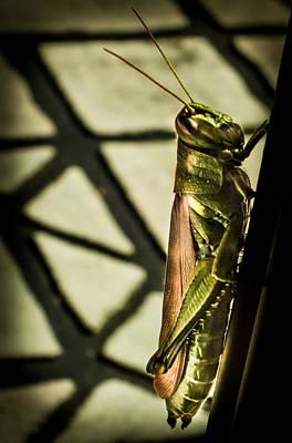 Abstract Grasshopper Original by Karen Wiles