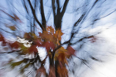 Abstract Impressions Of Fall - Maple Leaves And Bare Branches Print by Georgia Mizuleva