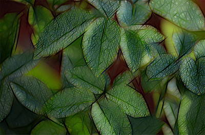 Abstract Leaves Print by Ronald T Williams