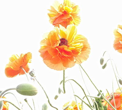 Floral Photograph - Abstract Poppies by Cynthia Templin