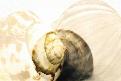 Abstract Sea Shells  Original by Toppart Sweden