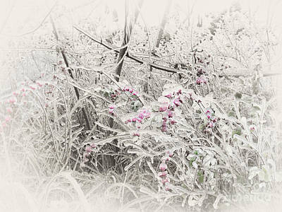 Nature Photograph - Abstract Sepia Toned Frozen Branches by Oleksiy Maksymenko
