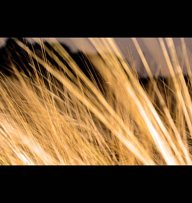 Abstract Wheat Field Original by Toppart Sweden