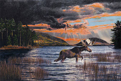National Park Drawing - Acadia Feast by Brent Ander