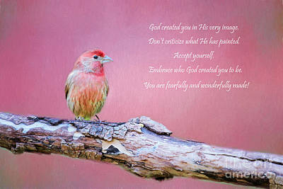House Finch Photograph - Accept Yourself by Darren Fisher