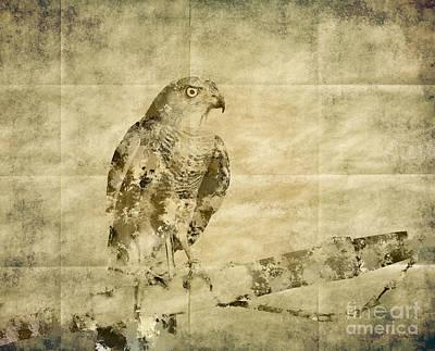Majestic View Mixed Media - Accipiter Badius - Shikra by Image World