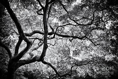 Underneath Photograph - Acer Japonicum Monochrome by Tim Gainey